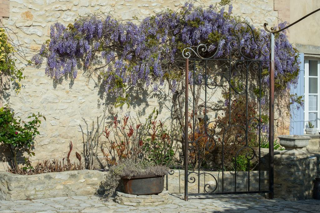 Rustic wall with wisteria