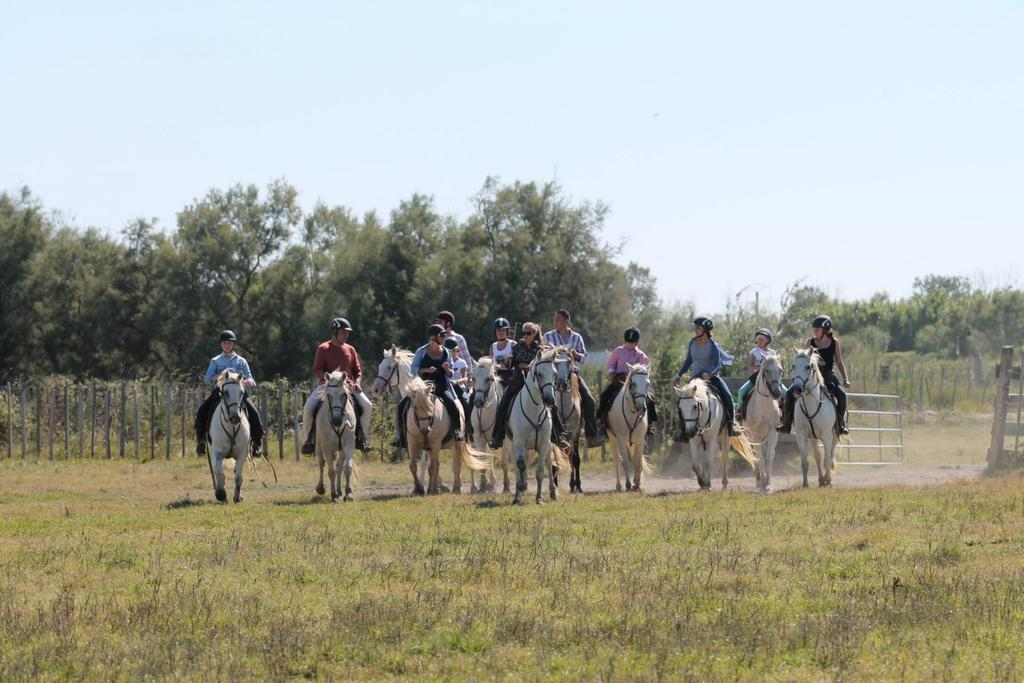 Horse riding in the Camargue